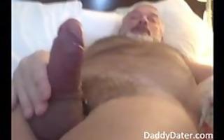 hung dad bear blows his load